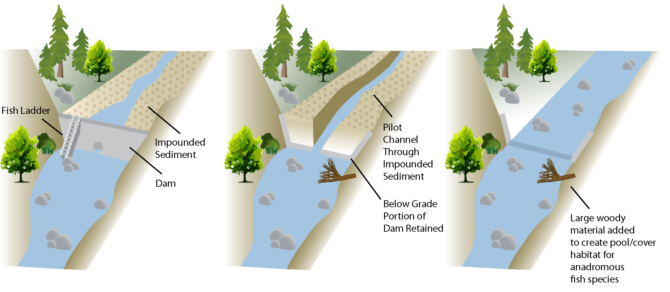 Schematic of the current condition, immediately post-construction and future condition of the once dammed reach